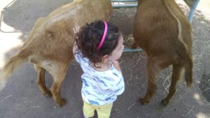 Traveling with a pair of wild and wildly-compulsive hand-washers leads to a lot of consternation about if you are petting the goats too close to their butts even if it's already widely known that you will be washing your hands as soon as you are done.